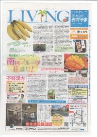 """岡山県瀬戸内市の神宝マンゴー。""""リビングおかやま""""で神宝マンゴーが紹介されました。"""
